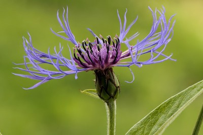 Backyard exotic flower.