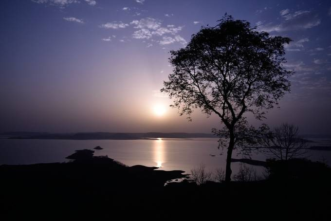 Tree and the Sun by Shubh299 - Silhouettes Of Trees Photo Contest
