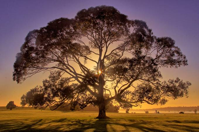 GI tree by johankoch - Silhouettes Of Trees Photo Contest