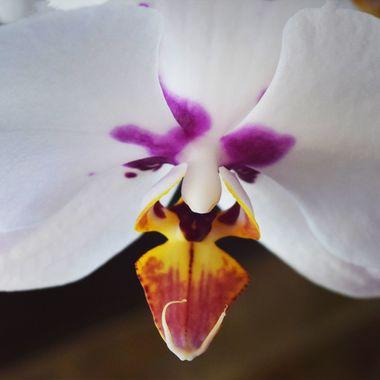 orchids details