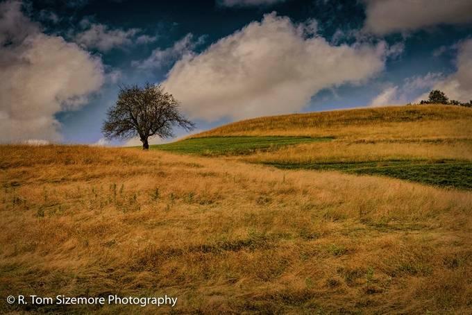 Taken in Clay County, West Virginia, this tree stood out at the top of the field.  The sunlit drying grass and recently cut (now green) grass contrasted nicely.