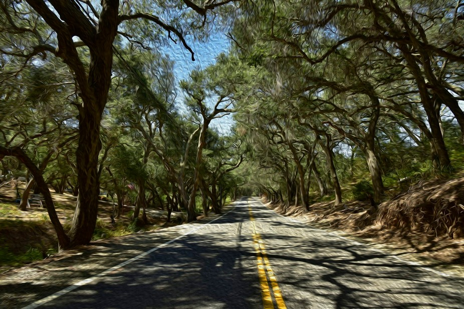 Beautiful Oak Trees line both sides of this rural road in Orange County, California.   Several wo...