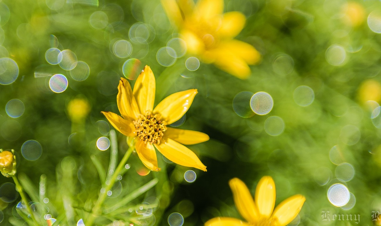 Flowers (5 of 7)