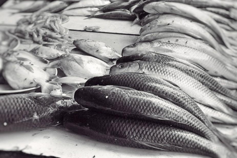 Fresh catch of fish in Mumbai