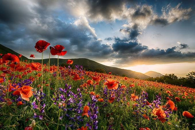 Red by giovannivolpe - The Colors Photo Contest