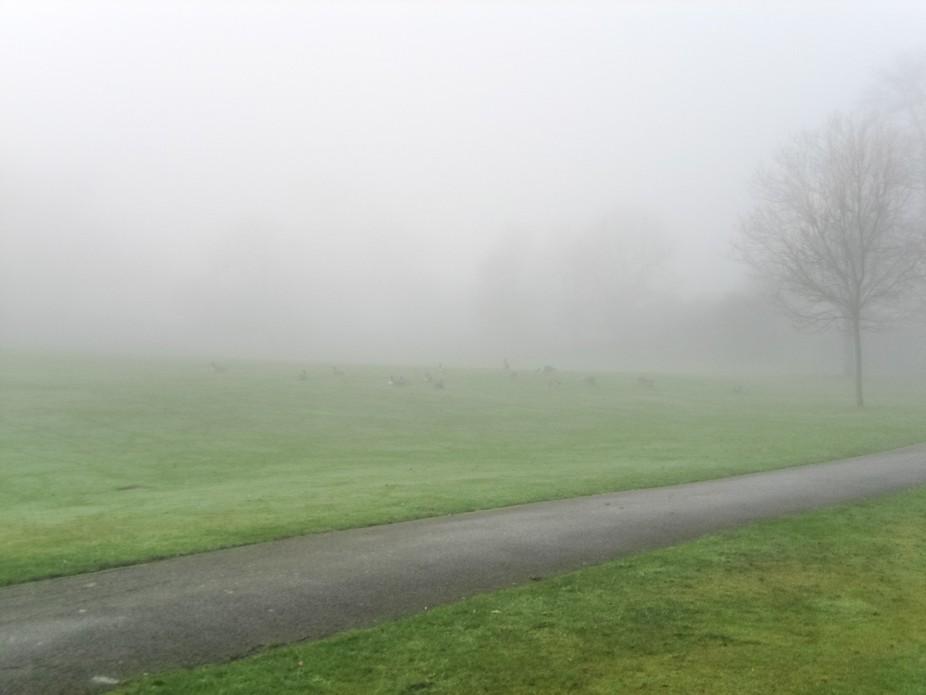 Fog 052