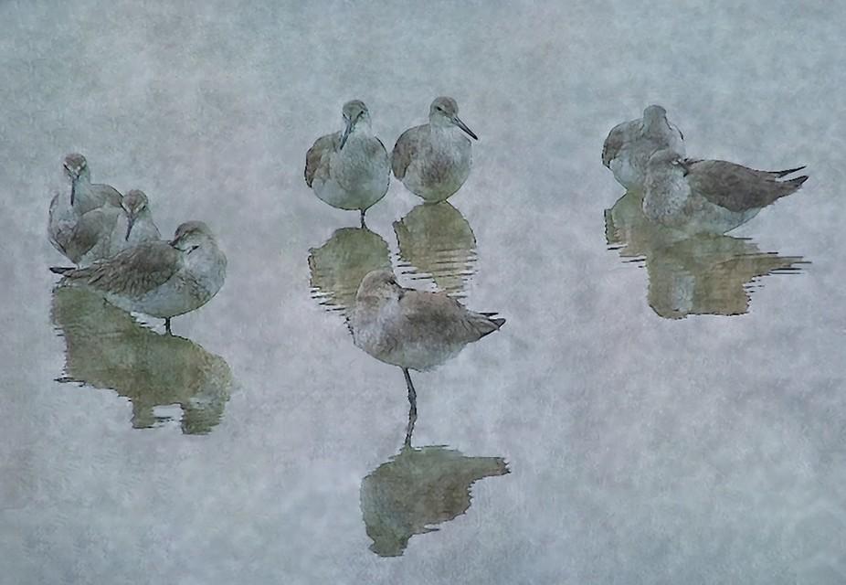 Shore birds napping