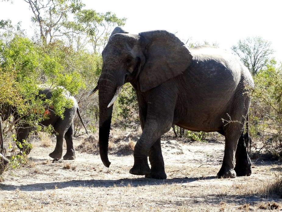 At the Kruger Park