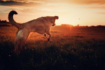 sundown jump