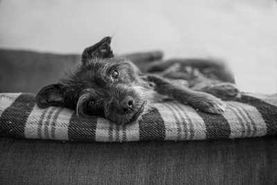 Basil on the Couch BW