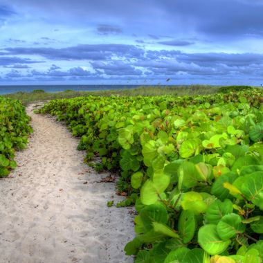 Delray Beach, Florida, USA.   This path is on the north side of the town, heading down to the beach.  It goes through the grape leaves, and winds up at the lifeguard stand (seen far away on the right).   The ocean is in the background.  Three image exposure (Bracketed) and brought together using Photomatix Pro - cleaned up in Lightroom.