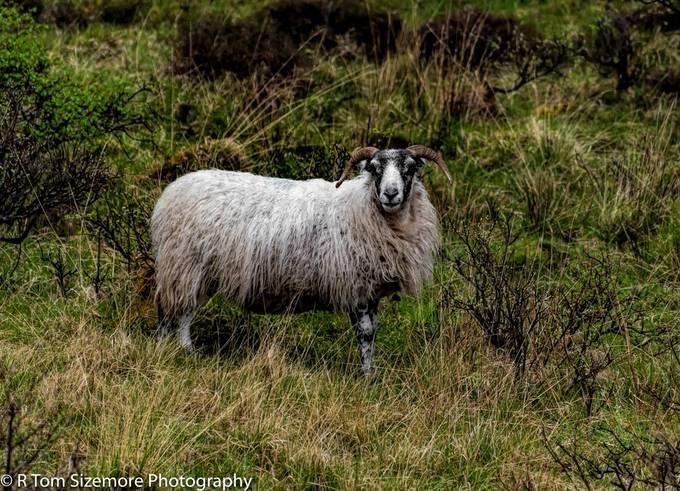 Along the road to Engol, Isle of Skye, Scotland.