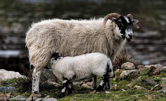 Taken along the road to Engol, Isle of Skye, Scotland