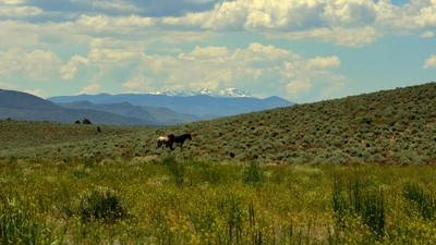 Wild horses, Wildflowers,  and Wilderness