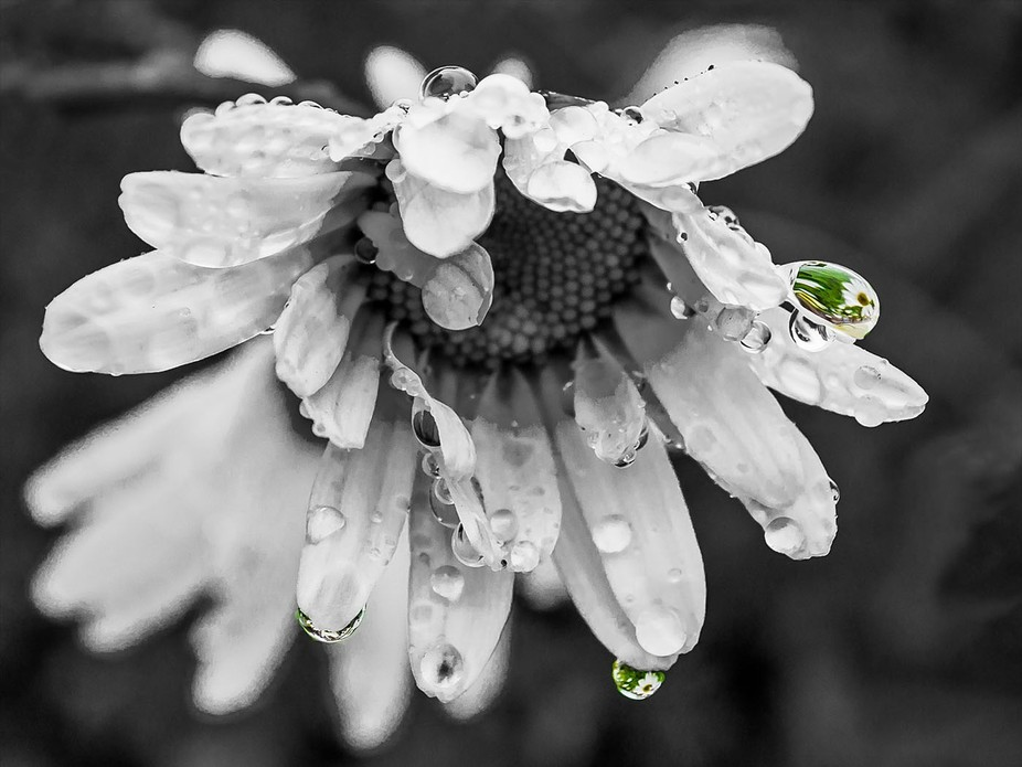 After the Rain by Jackie Sellers