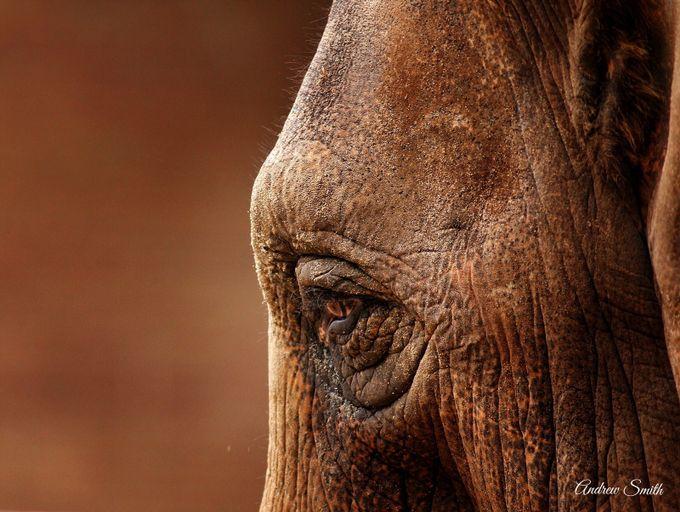 Sadness by andrewsmith_5524 - Big Mammals Photo Contest