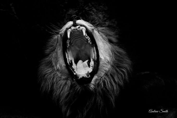 Yawn by andrewsmith_5524 - Monthly Pro Vol 24 Photo Contest