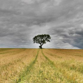 I've been looking for this location tree on a hill in a crop field and i found it in Northumberland ,real tree and field in the same locatio...