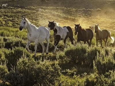 Galloping Through the Mountains
