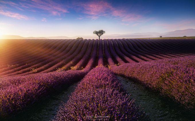 Purple Sun by dustpixxByFabioAntenore - In the Center Photo Contest