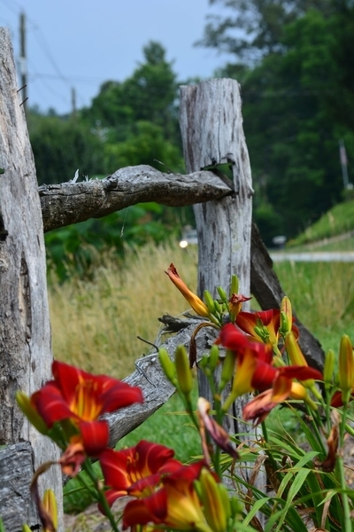 Fence of Beauty