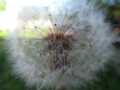 air dandelion