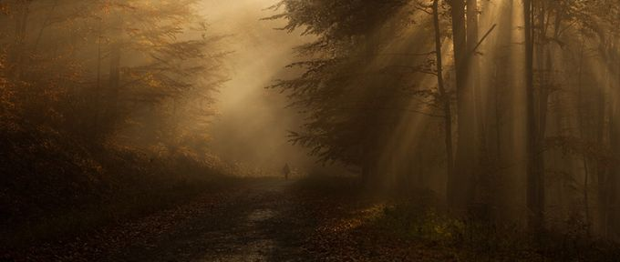 Light for the way by petersvoboda - A Walk In The Mist Photo Contest