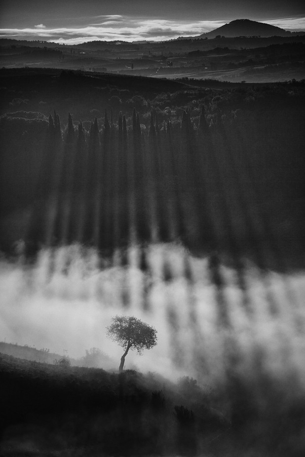Light-breaking-through-the-cypres-trees by petersvoboda - Patterns In Black And White Photo Contest