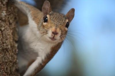 Mr Nutty