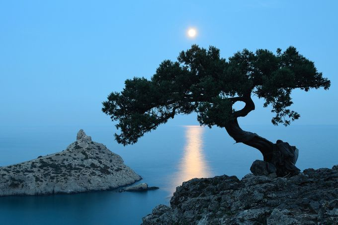 Moonlight Sonata by antongorlin - A Lonely Tree Photo Contest
