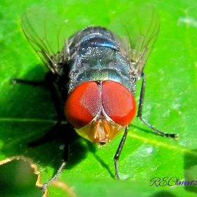 Huge eye on such a little fly. I wonder what I looked like to him with all those facets