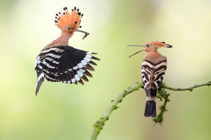 The Beauty Of Birds Photo Contest Winners