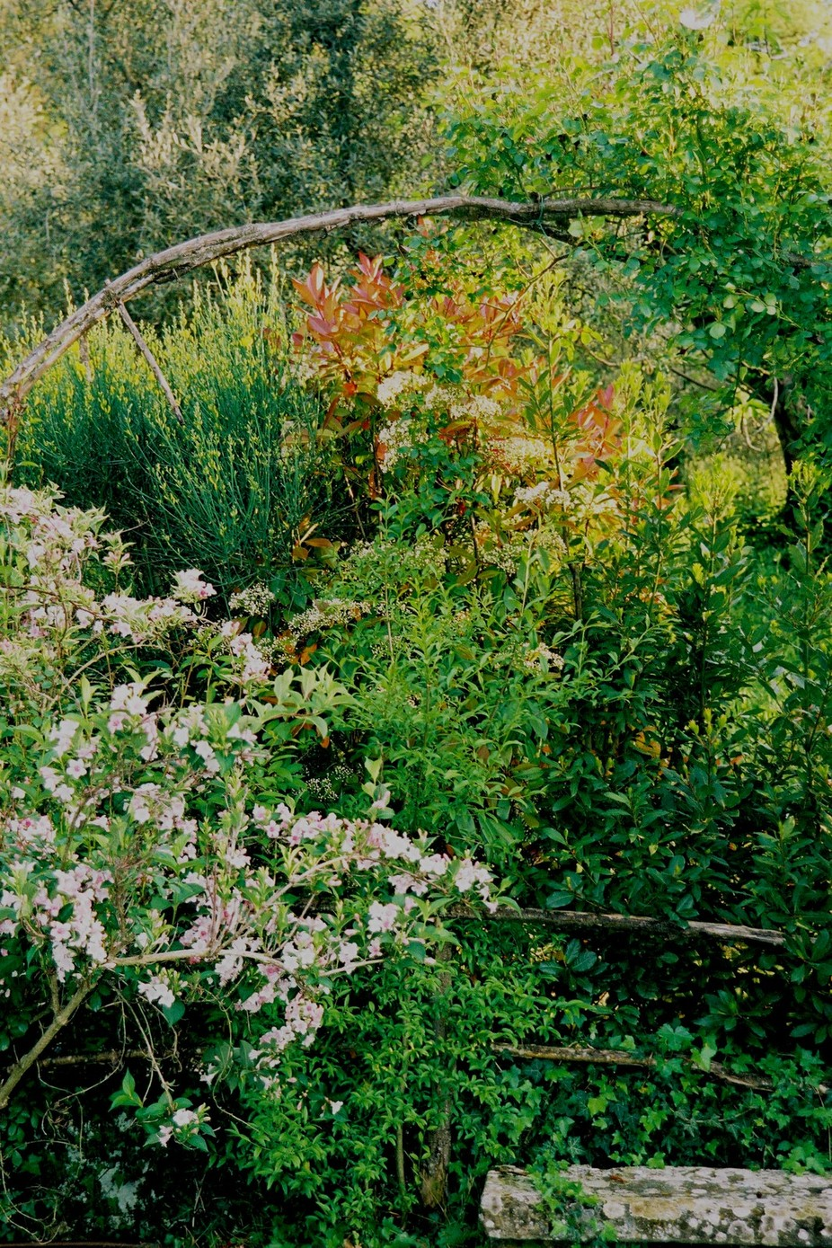 Looking out through a window onto a beautifully overgrown garden in Italy in 2006..it was early spring