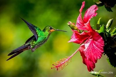 Humming Bird_9058_ViewBug_BW_2048