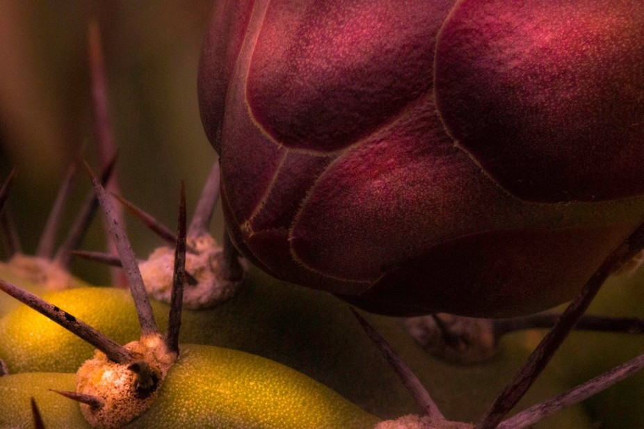 This is a macro of a cactus.