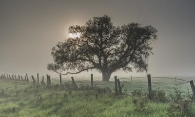 Misty_Morning