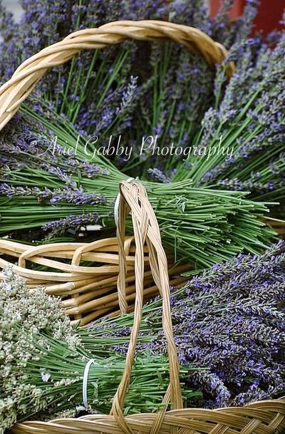 A sea of lavender.
