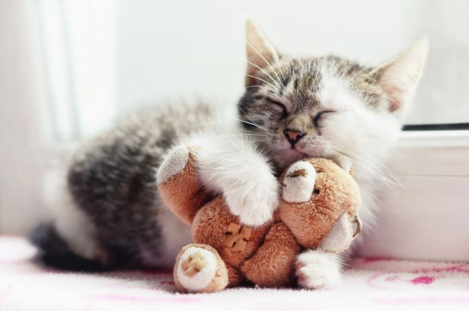 Sleepy by RodicaCosarba - Kittens vs Puppies Photo Contest
