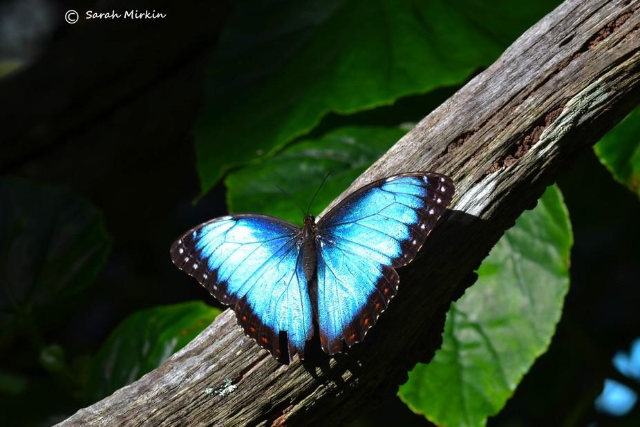 Blue Glory