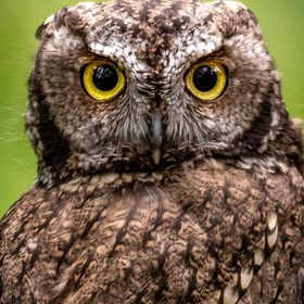 Owls have the most amazing eyes!