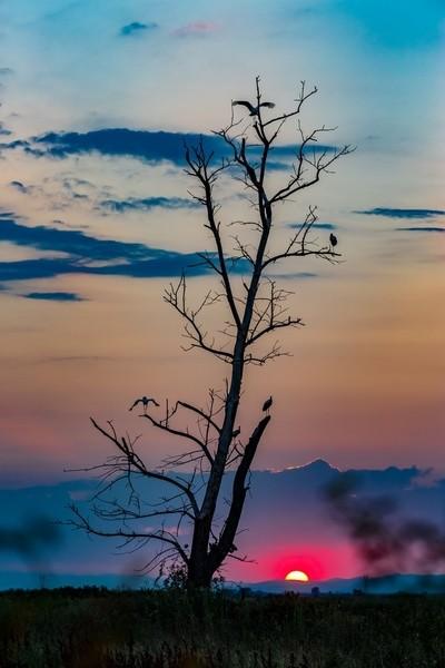 Few storks meeting the sunset