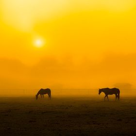 Early morning fog at a nearby horse farm..