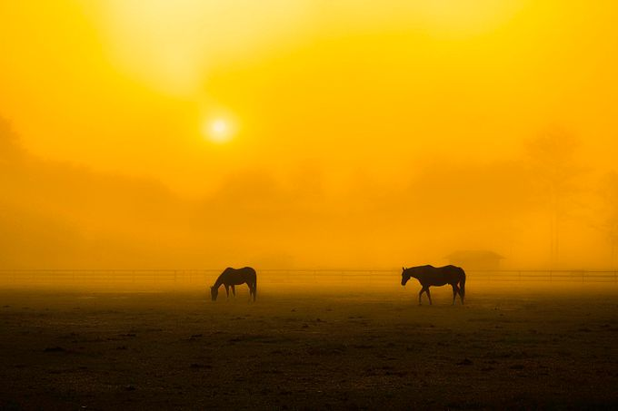 Early morning Fog on the horse farm by Photogirl118 - Farms And Barns Animals Photo Contest