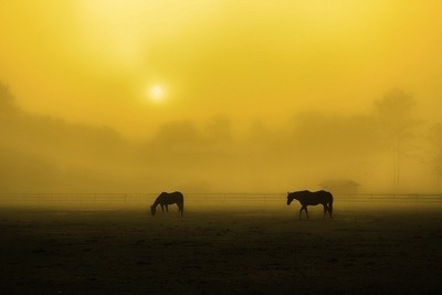 Early morning Fog on the horse farm