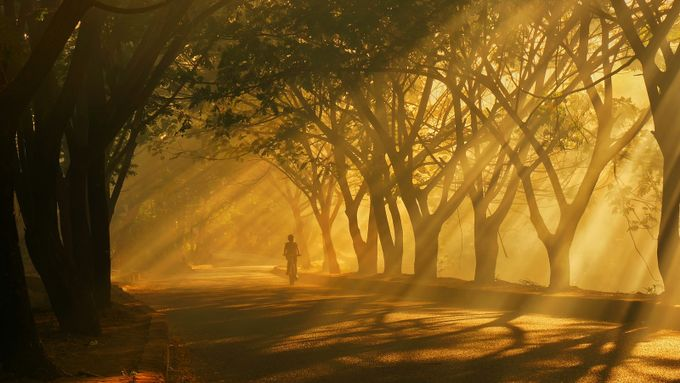 morning blessed by februadi - Silhouettes Of Trees Photo Contest