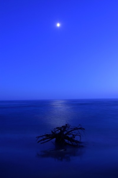 Driftwood in the Moonlight.