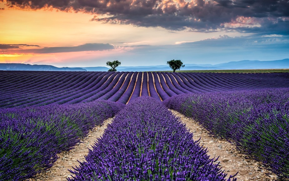 This photo are from valensole, this is small village and all around is a lot of nice levander fie...