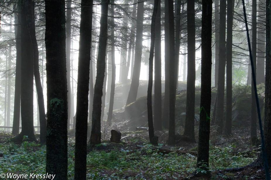 Illuminated forest floor/