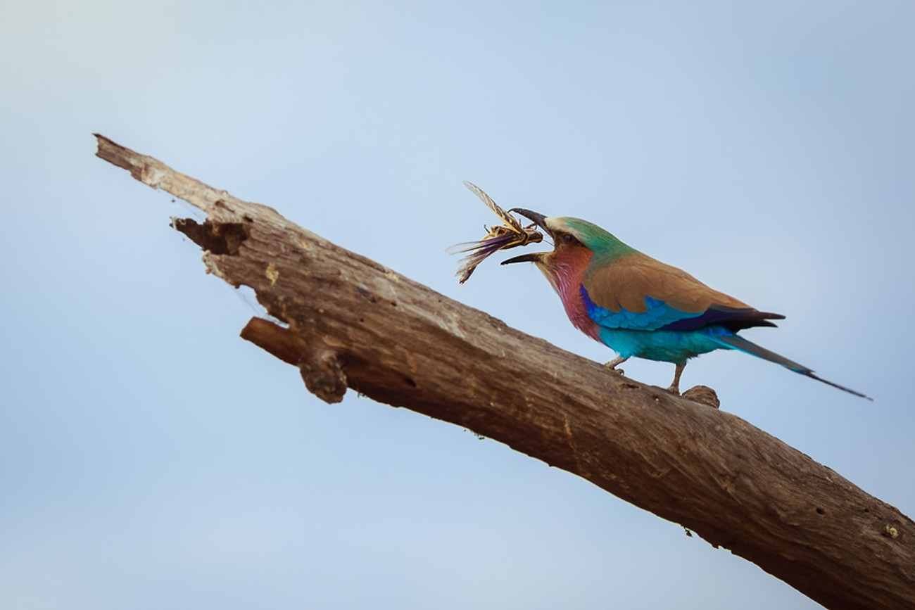 How To Photograph Birds by Anne McKinnell