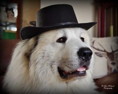 Eros says Howdy Partners
